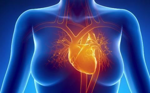 Illustration of woman's heart