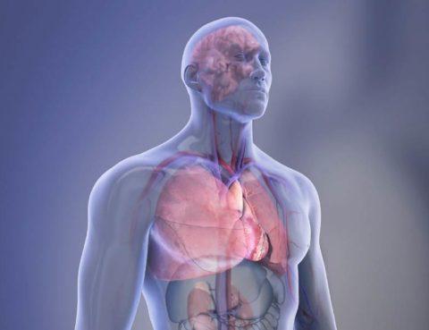Illustration: Man's torso with highlighted organs.