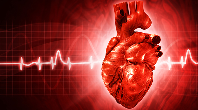 Illustration: human heart with EKG tracing