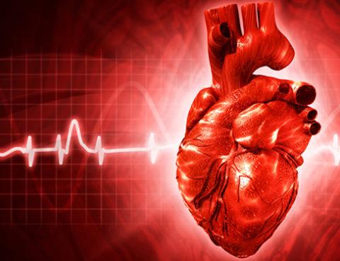 Illustration: human heart with EKG tracing